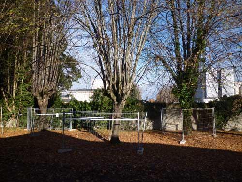 protection-arbre-déconstruction-bds