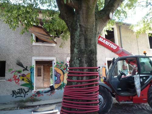 protection-arbre-environnement-bds